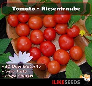 """VISA STORE Tomate""""Riesentraube"""". 20 Samen Minimum. Gemüsegarten Samen"""