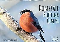 Dompfaff, Blutfink, Gimpel (Wandkalender 2022 DIN A2 quer): Drei Namen fuer einen Vertreter der Finken (Monatskalender, 14 Seiten )