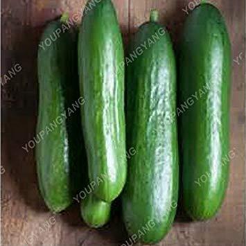 VISTARIC 50pcs Roter Rettich Samen Sukkulenten Biologisch Gemüse Leicht Anbau Kirsche Rettich Topf Früchte für Garten Farm Hof