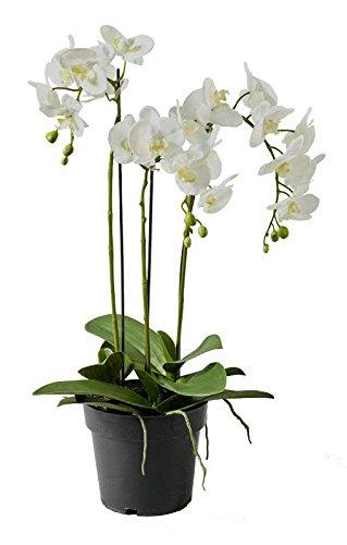 Künstliche Orchidee im Topf - Dekoration Kunstorchidee - Weiße Blüten & Grüne Knospen - Naturgetreue & Hochwertige Phalaenopsis/Dekoorchidee - Höhe: 70cm - Topfpflanze/Dekopflanze