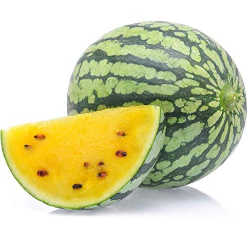 Gelbe Wassermelonensamen 8+ Sweet Fruit Vine Bio Nicht-GVO Leicht zu züchten (Citrullus lanatus) für Garten Outdoor Indoor Farm
