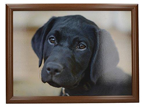 Creative Tops 'Labrador' Cushioned Bean Bag Lap Tray, 44 x 34 cm (17.5' x 13.5') - Multi-Colour