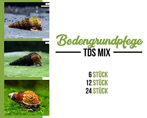 Garnelen Turmdeckelschnecken Mix - Bodenpflege - Aquarium Schnecken - Bodenpflege Trupp, Menge:6 STK.