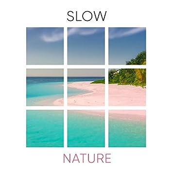 # 1 Album: Slow Nature