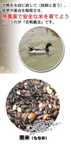 長崎県産 一支国 原の辻遺跡 合鴨農法無農薬 古代 黒米 10kg 壱岐