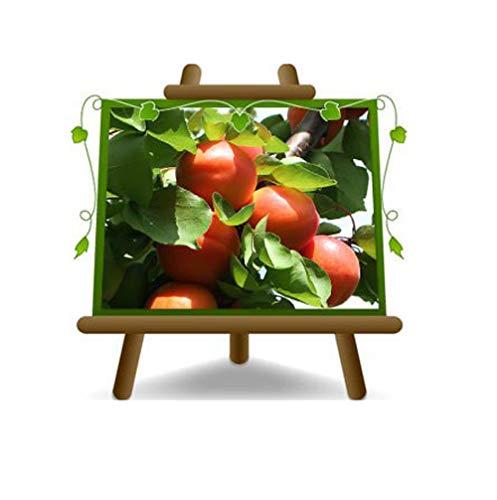 Abricot Nain - plante fruitière greffant du myrobalan sur pot 20 - arbre max 80 cm - 2 ans