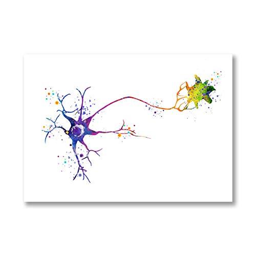 YWOHP Multipolar Cerebro neurona célula anatomía Arte impresión neurología Cartel médico anatomía biología Lienzo Decorativo pintura-50x70_cm_No_Frame_PB2979