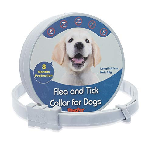 BINGPET Dog Flea and Tick Control Collar - 8 Months Protection - Waterproof Natural Pet Doggie Kitty Anti Flea Collar with Safe Essential Oil, Adjustable 41cm for Small Dogs Cats Puppies