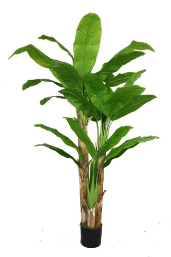 Vintage Home 72 Inch Tall Banana Tree with Real Touch Leaves