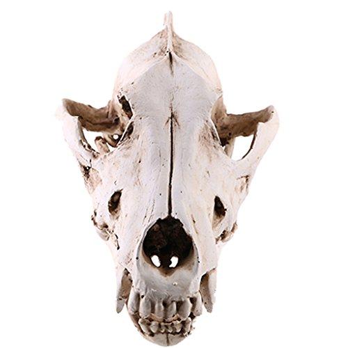 Künstliche Wolf Schädel Figur Dekofigur Modell Ornament