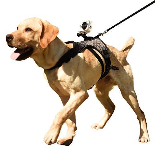 smileyshy Kamerahalterung für Hunde, Funktion als Kamerahalterung oder Gehgeschirr, geeignet für große Rassen, verstellbare Passform Deluxe Hundehalterung für Kameras