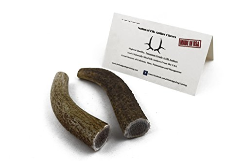 strong Elk Antlers for Dogs to chew on