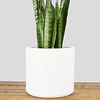Indoor Flower Pot | Large Modern Planter, Terracotta Ceramic Plant Pot - Plant Container Great for Plant Stands (10.5 inch, White)