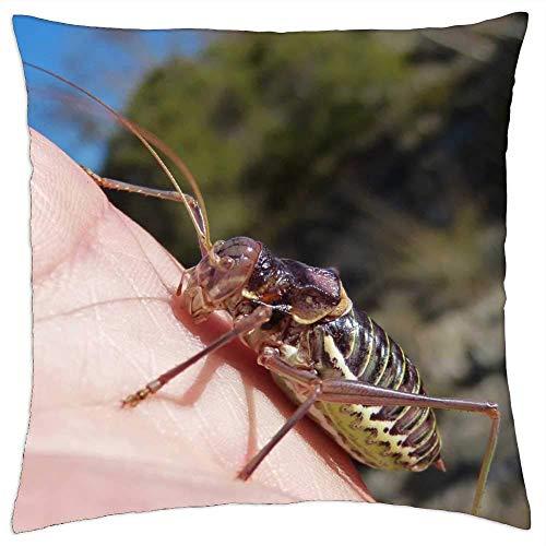 ETGeed Somereta Montsant - Fundas de Almohada endémicas de Insectos, cojín Decorativo para sofá Cama, decoración del hogar, 18 x 18 Pulgadas