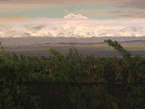 Gift of the Andes: Mendoza, Argentina and Its Wines