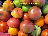 Go Garden Red Zebra 30 graines: Heirloom Seeds tomate! 75 variÃtÃs non gÃnÃtiquement modifiÃes. Choix Buyers. ExpÃdition...