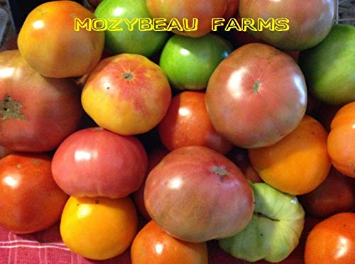 Go Garden Red Zebra 30 graines: Heirloom Seeds tomate! 75 variétés non génétiquement modifiées. Choix Buyers. Expédition combinée