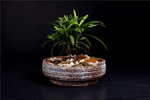 WBFN Opknoping mand Rattan Bloempot, Ceramic hoge temperatuur glazuur grote vlezige schotel pot hangen bekken, Ronde Resin Tuin opknoping Planter for Indoor Outdoor Plants HangerDecoration