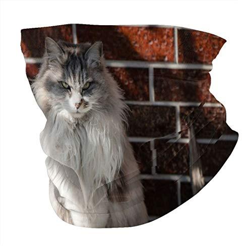 Norwegian forest cat esponjoso gato gris gato mascotas raza esponjoso gatos sin costuras Multifuncional Headwear Variedad Bufanda Cabeza Diseño Personalizado Capucha Deportes al aire libre Diadema
