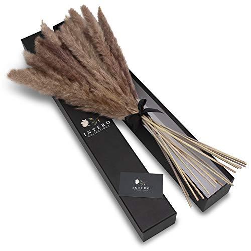 INTERO Collections Pampasgras inkl. Geschenkverpackung - Natürlich getrocknetes Pampas Gras als Moderne Boho Deko für Wohnzimmer & Schlafzimmer - Hochwertige Trockenblumen (Naturbraun)