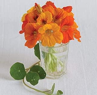 David's Garden Seeds Flower Nasturtium Trailing Mix SL1201 (Multi) 50 Non-GMO, Heirloom Seeds
