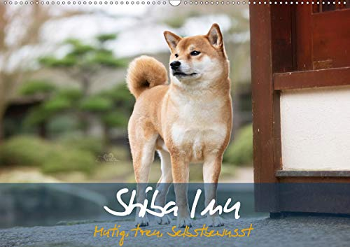 Shiba Inu - mutig, treu, selbstbewusst (Wandkalender 2021 DIN A2 quer)