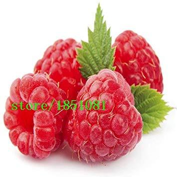 Vista Grande promotion 100 Quatre variétés de graines de framboise!variété de choix de fruits délicieux!Comestible!Facile à cultiver!Accueil g