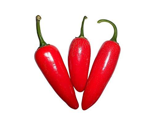 Jalapeno Pepper 10 Samen (Massenträger) von Samenchilishop