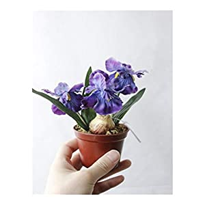 JiaQinHe Remains Artificial Bonsai Iris Silk Flowers Bonsai Plants Artificial Flowe for Wedding Home Party Decorative Never