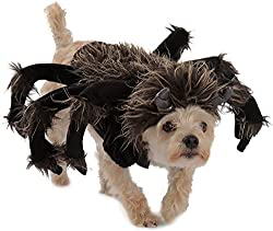 10 Best Dog Spider Costumes for Small and Large Dogs