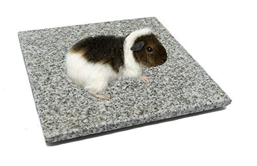 DiConcetto Piedra rascadora/piedra de cuidado y placa de refrigeración/piedra climática de granito para hámsters, cobayas, conejos y otros roedores (20 x 15 cm)
