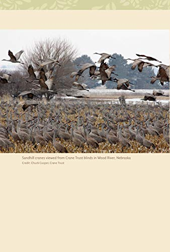 Pandas to Penguins: Ethical Encounters with Animals at Risk (W. L. Moody Jr Natural History Series)