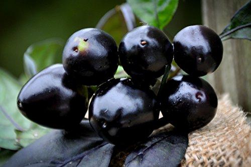 Black Pearl Hot Pepper Premium Seed Packet + More