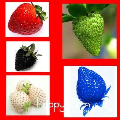 potente para casa Negro: ¡Límite de tiempo!  Semillas de fresa Semillas de frutas, 5 tipos de fresas – 200…