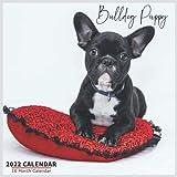 Bulldog Puppy Calendar 2022: Official English Bulldog Calendar 2022, 16 Month Calendar 2022
