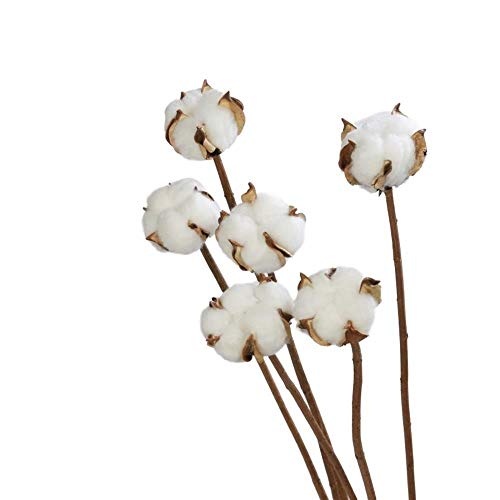 THQC 6pcs/bunch Natural dry flower cotton branches single cotton ball dried flower head artificial cotton branches white (Color : 6 pcs per bunch)