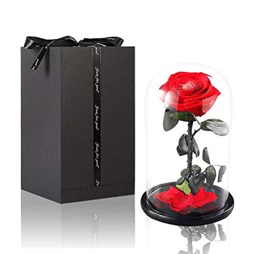 Amycute Ewige Rose im Glass Die Schöne und Das Biest Rote Rose mit Exquisiter Rosenbox Echte Rote Rose mit Glaskuppel Geschenk für Zuhause, Hochzeit, Valentinstag, Weihnachten, Geburtstag