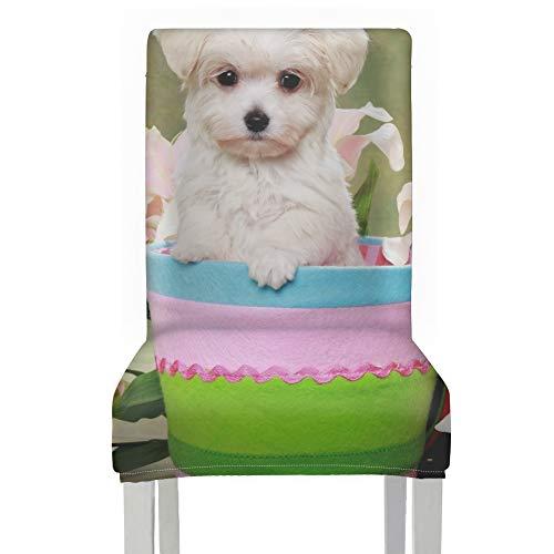 Copertura per tavolo da pranzo, sedie per cagnolino maltese pasquale, coprisedili, in poliestere, elasticizzato, rimovibile, lavabile, per casa, cucina, feste, ristoranti, matrimoni
