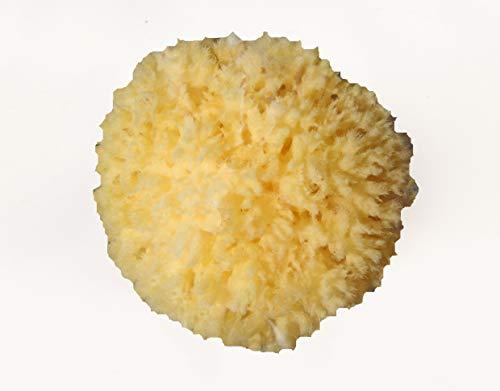 La Corail Éponge de Mer adultes – Pouf-fauteuil, 12 cm – 11 g