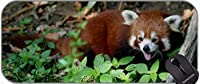 プレミアムテクスチャ布、パンズ動物パンダゴムマウスパッドを持つ大型マウスパッド
