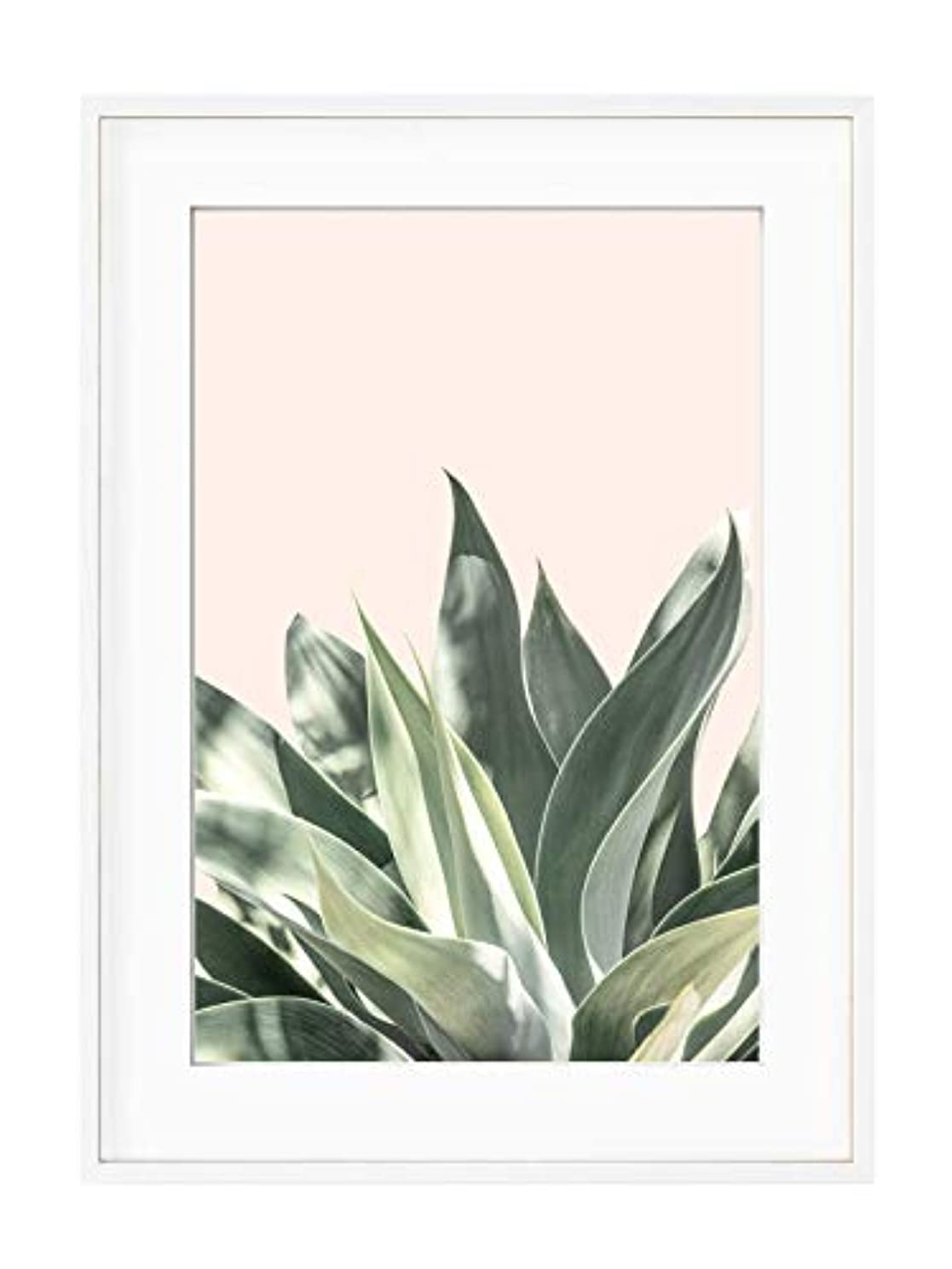 Aloe on a Pink Background with White Lacquer Wooden Frame and Mount, Multicolored, 50x70
