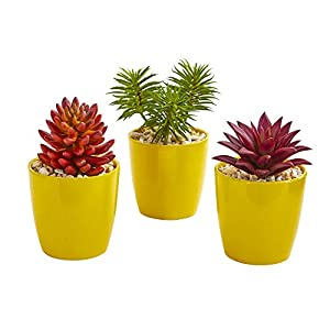 """Nearly Natural 9"""" Mixed Succulent Artificial Yellow Vase (Set of 3) Silk Plants, Red/Green"""