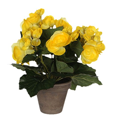 MICA Decorations 977007 Fleurs, Begonia, Jaune