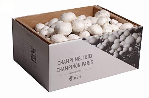 SETAS MELI | Kit de culture autonome de champignons Paris | faire pousser des champi à la maison | Germes en 14 jours | Kit cadeau parfait | Fabriqué en Espagne