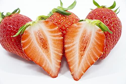 冷凍いちご 群馬県産 やよいひめ 2�s お菓子作り ジャム スムージー (6.0)
