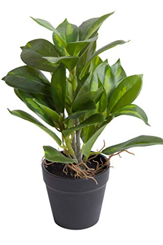 Botanic-Haus Kunstpflanze (Palme, Ficus, Schefflera, Akuba, Croton) Höhe ca. 30 cm im schwarzen Kunststofftopf (Benjamini grün-Creme)