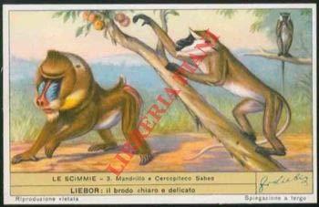 Le scimmie. I.