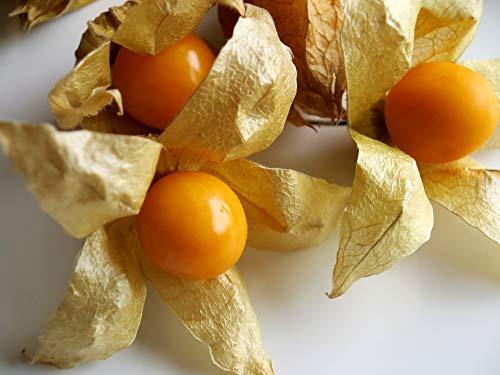 Ananasbeere - Physalis pruinosa 250 Premium-Samen -100%Natursamen - absolute Rarität