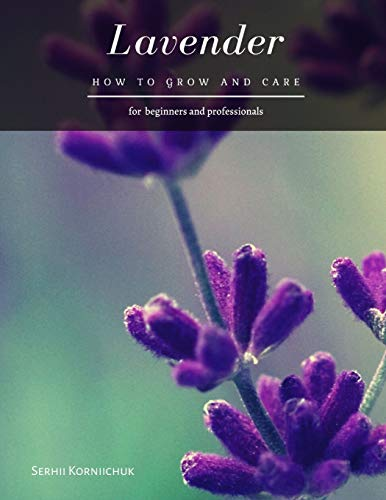Lavender: How to grow