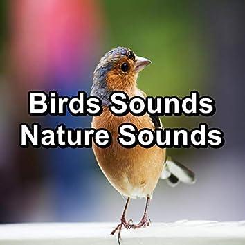 Birds Sounds Nature Sounds